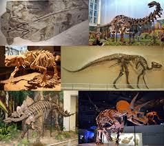 Fósiles: testigos del pasado