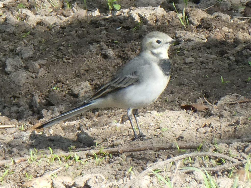 Paseo ornitológico por el Parque Lineal del Manzanares